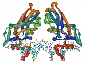 Protein Zone June 2014, TBR1 Protein Structure | Image: Wikimedia