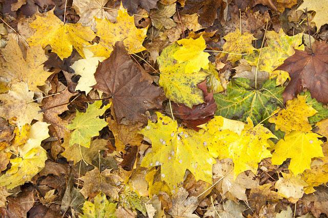 "A ""November"" scene   Image: Stux/Pixabay"