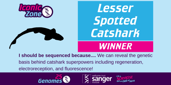 the winning species in the Iconic Zone is the Lesser Spotted Catshark