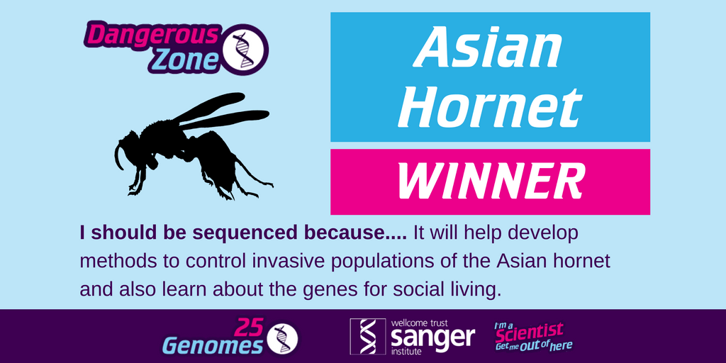 the winning species in the Dangerous Zone is the Asian Hornet