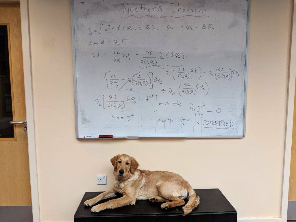 Emmy the golden retriever lying under a whiteboard covered in equations