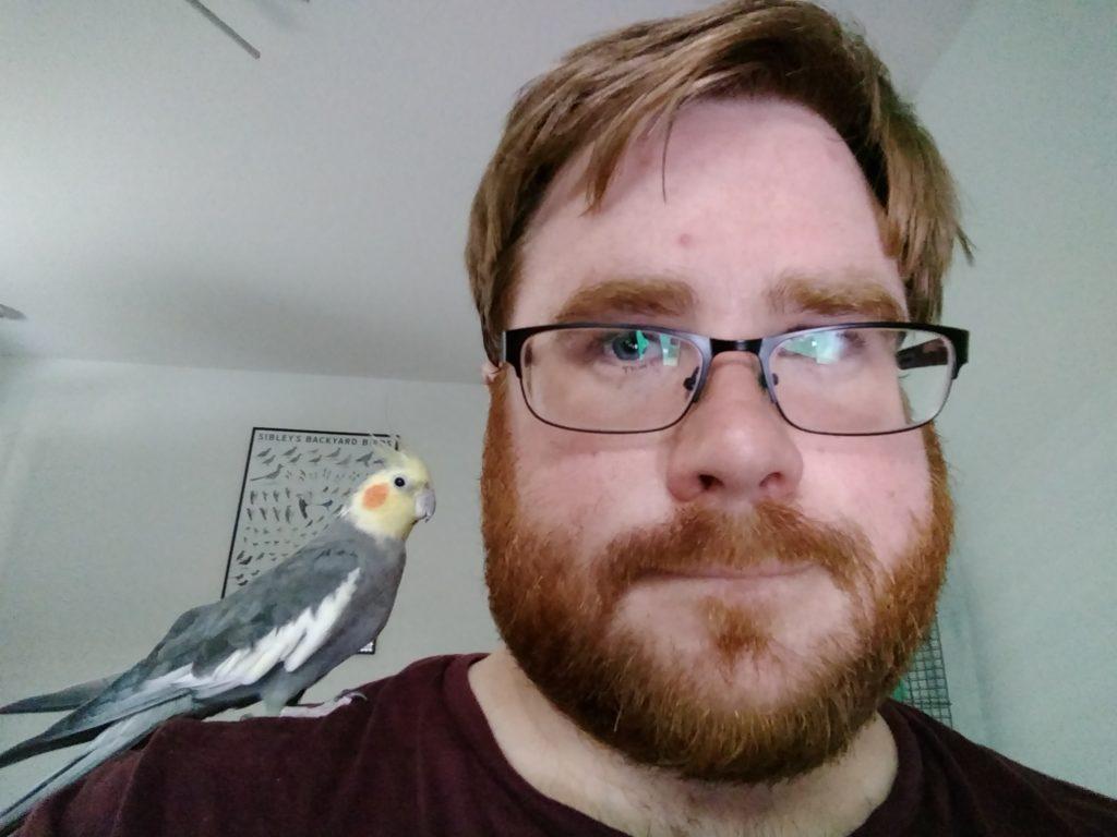 Phoenix the Cockatiel